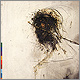 Peter Gabriel - Passion: The Last Temptation Of Christ - CD review